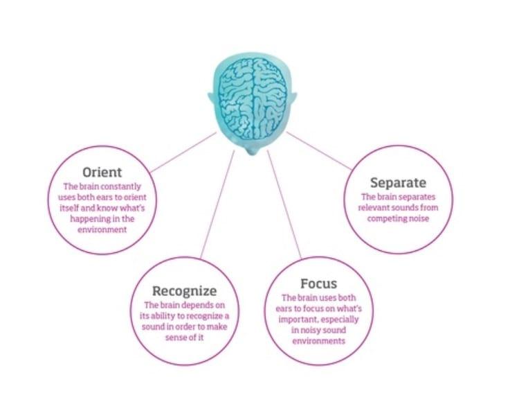 Oticon - Brain Hearing